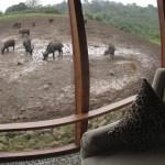 """The Big 5"" are regularly seen on a standard Kenya safari"
