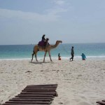 Camel in the beach