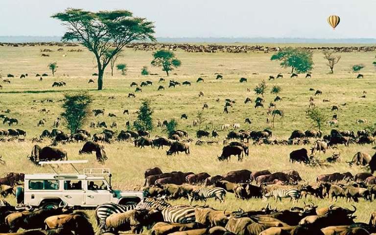 Migration et Safari photo - Serengeti Tanzanie - Organiser votre safari photo. Comment construire un circuit pas cher avec un guide internet pro. Le safari c'est d'abord avec les yeux et la photo si on veut !