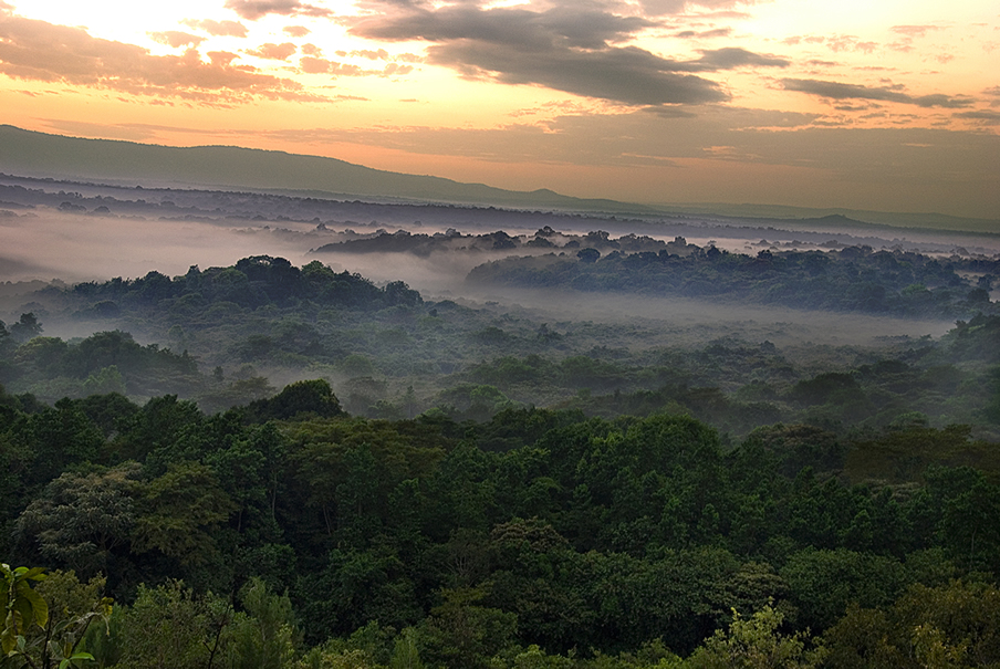 kakamega forest / Picture courtesy of KWS