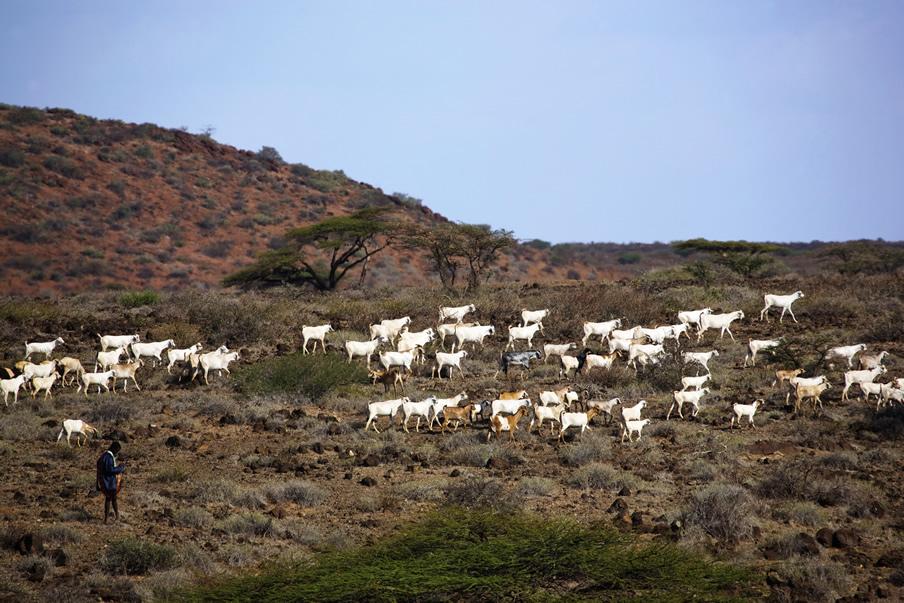 Marsabit National Park