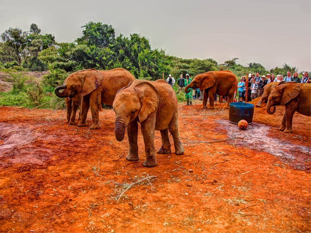 David_Sheldrick_elephant_play_ground