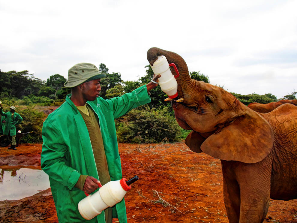 David_Sheldrick_feeding