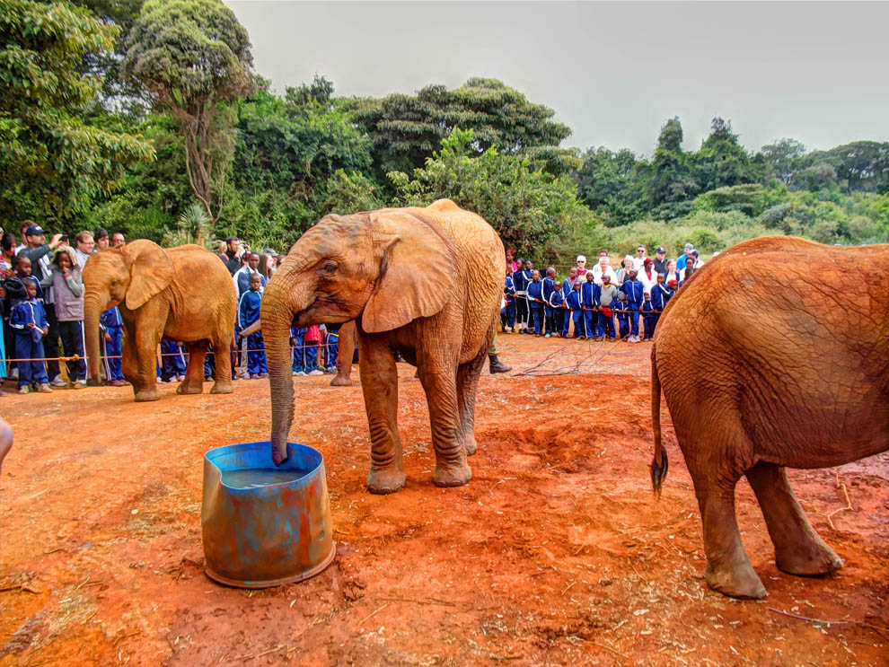 David_Sheldrick_water_sip