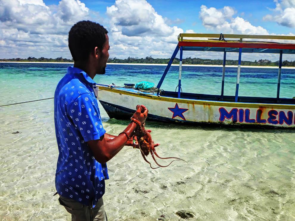 Octopus_Watamu marine park