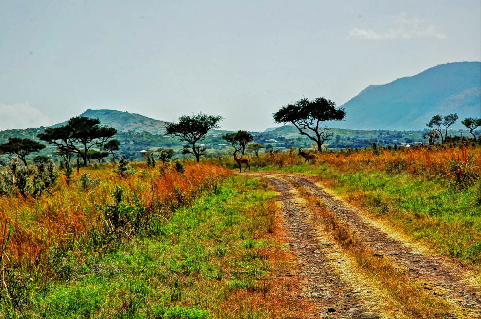 Ruma National Park_road