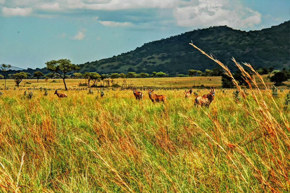 Ruma National Park_roan antelopes from afar