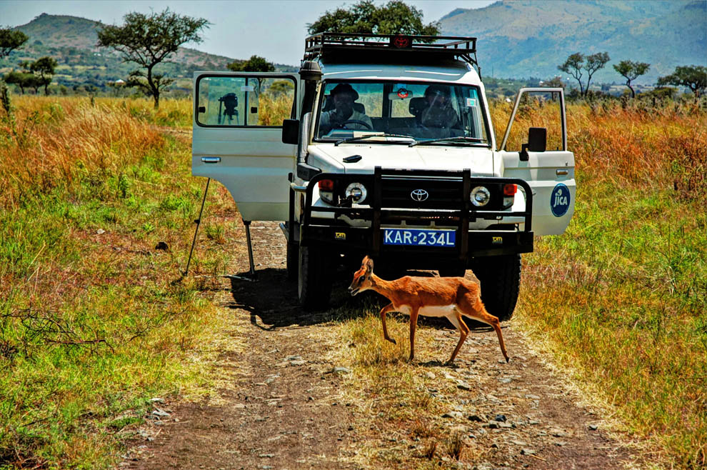 Ruma National Park_tour suv