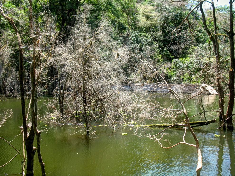 Marsabit National Park_Trees in dam inside park