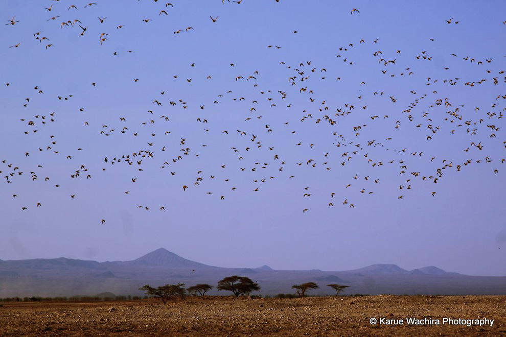 North Horr_migrating birds