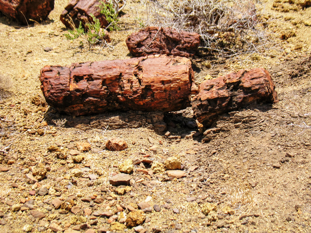 Sibiloi National Park_Petrified Forest log2