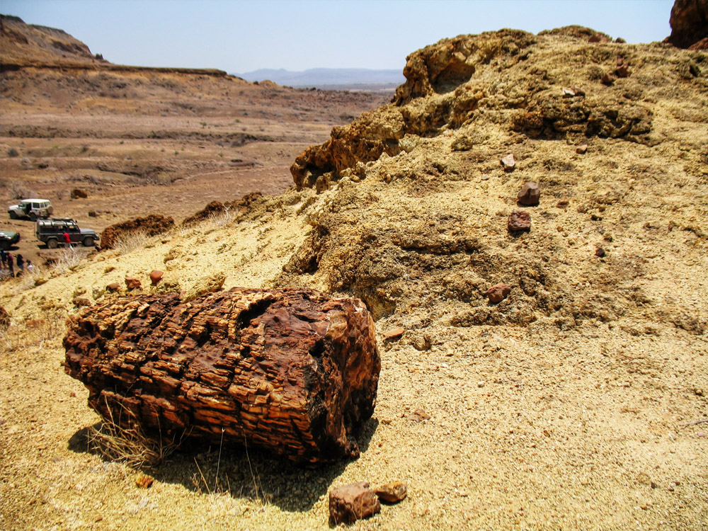 Sibiloi National Park_Petrified Forest log4