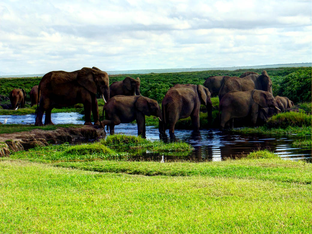 Amboseli National Park_Elephants drinking water
