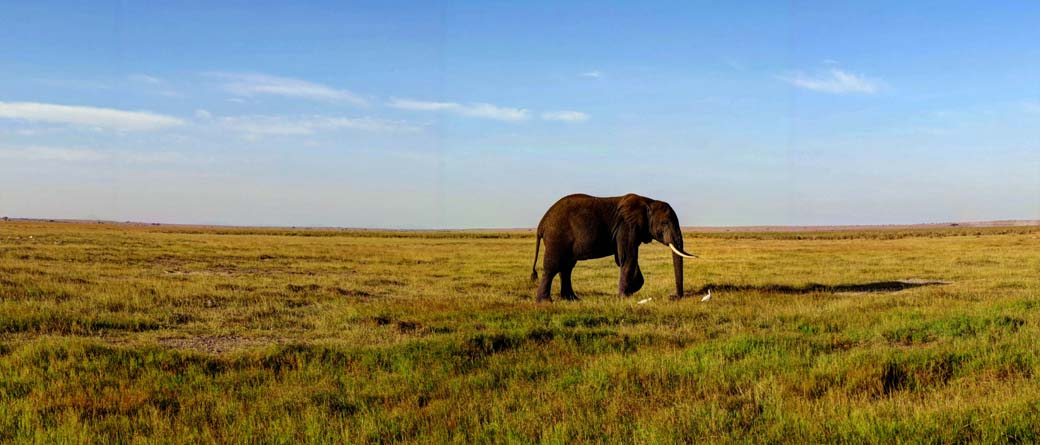 Amboseli National Park_Food Everywhere