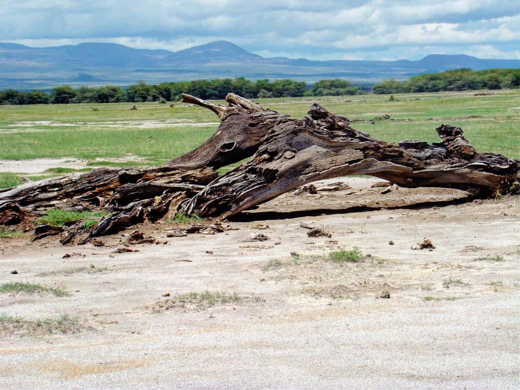 Amboseli National Park_Rotten Twig