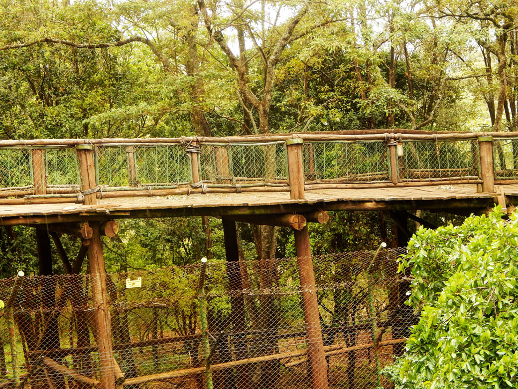 Nairobi Safari Walk_boardwalk view