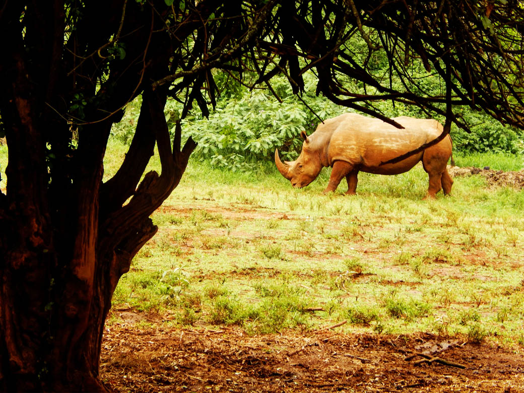Nairobi Safari Walk_rhino2