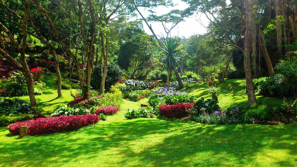Kapsimotwa gardens_flowers2