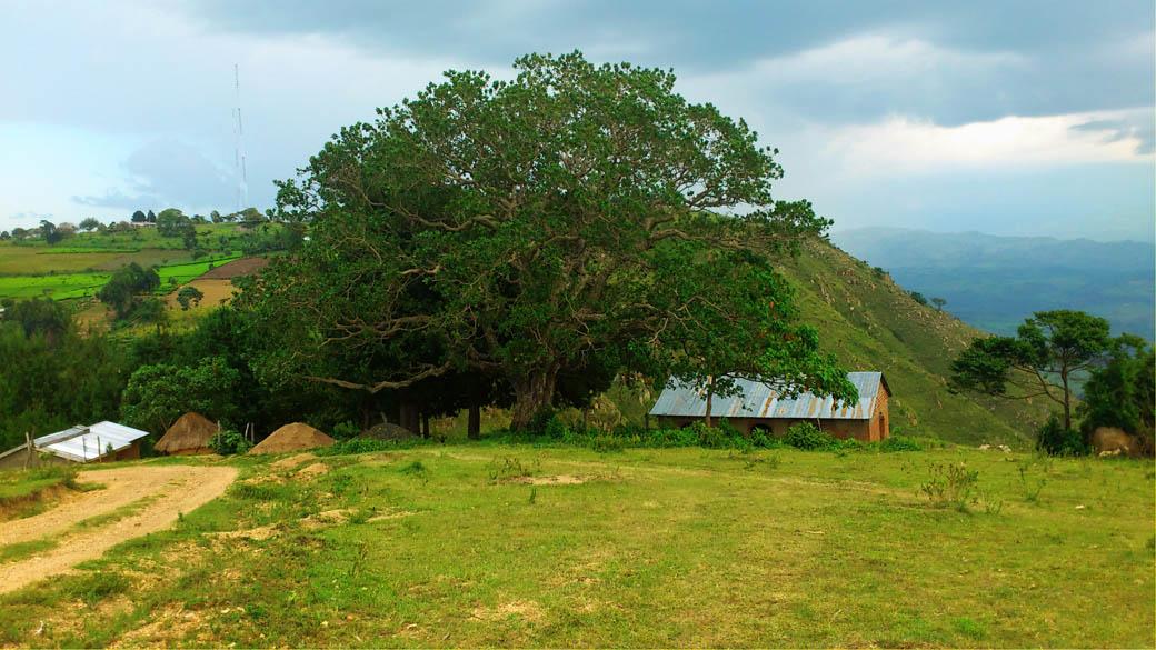 Kapsimotwa gardens_nandi hills