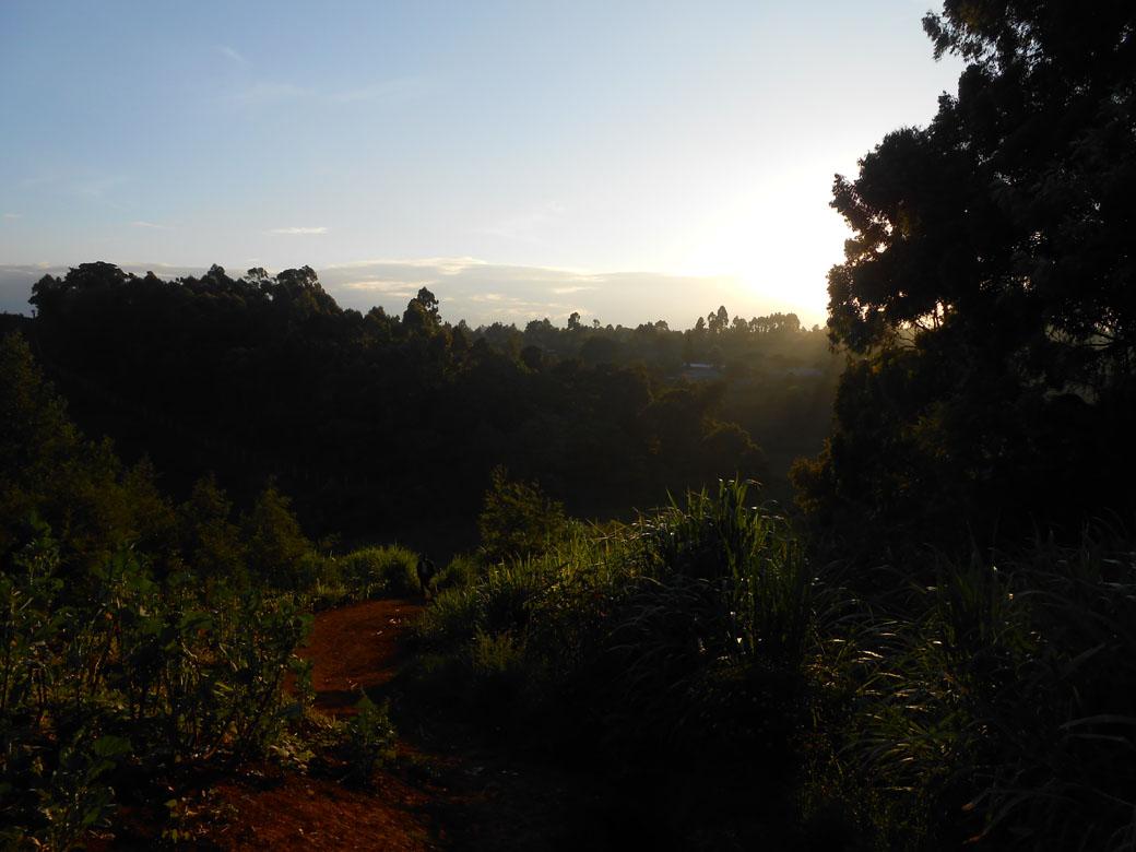 Ondiri swamp old path 1