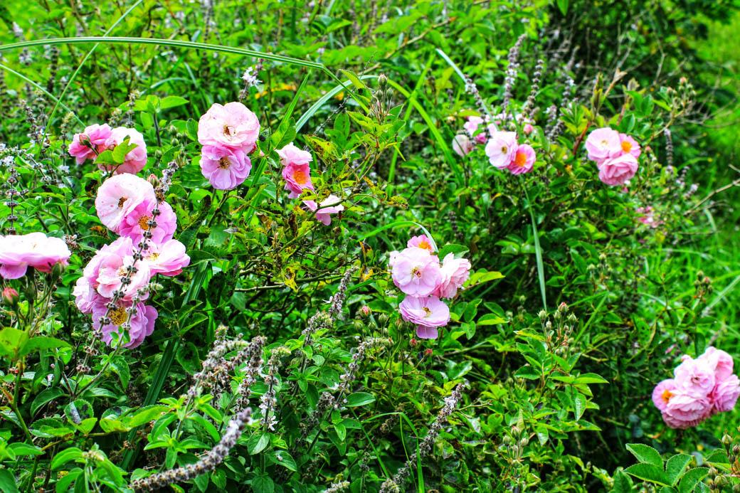 Save Mount Kenya _flowers2