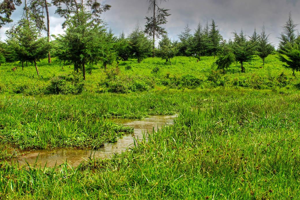 Save Mount Kenya_clearing3