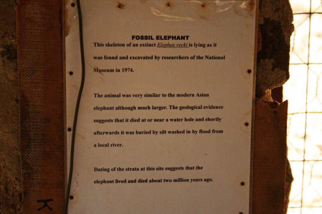 Elephant Fossil_Information