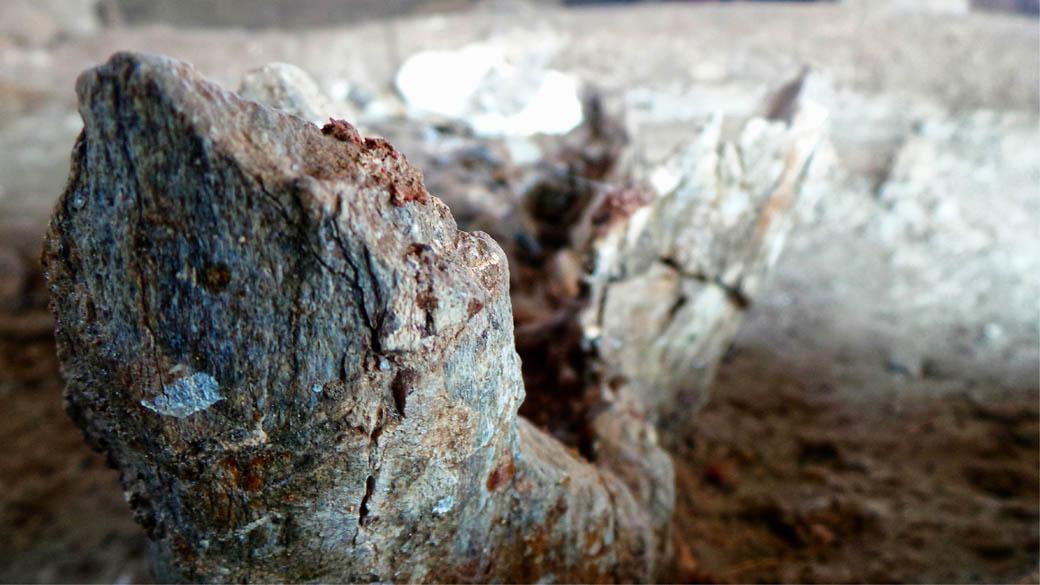 Elephant Fossil_Tusk upclose2