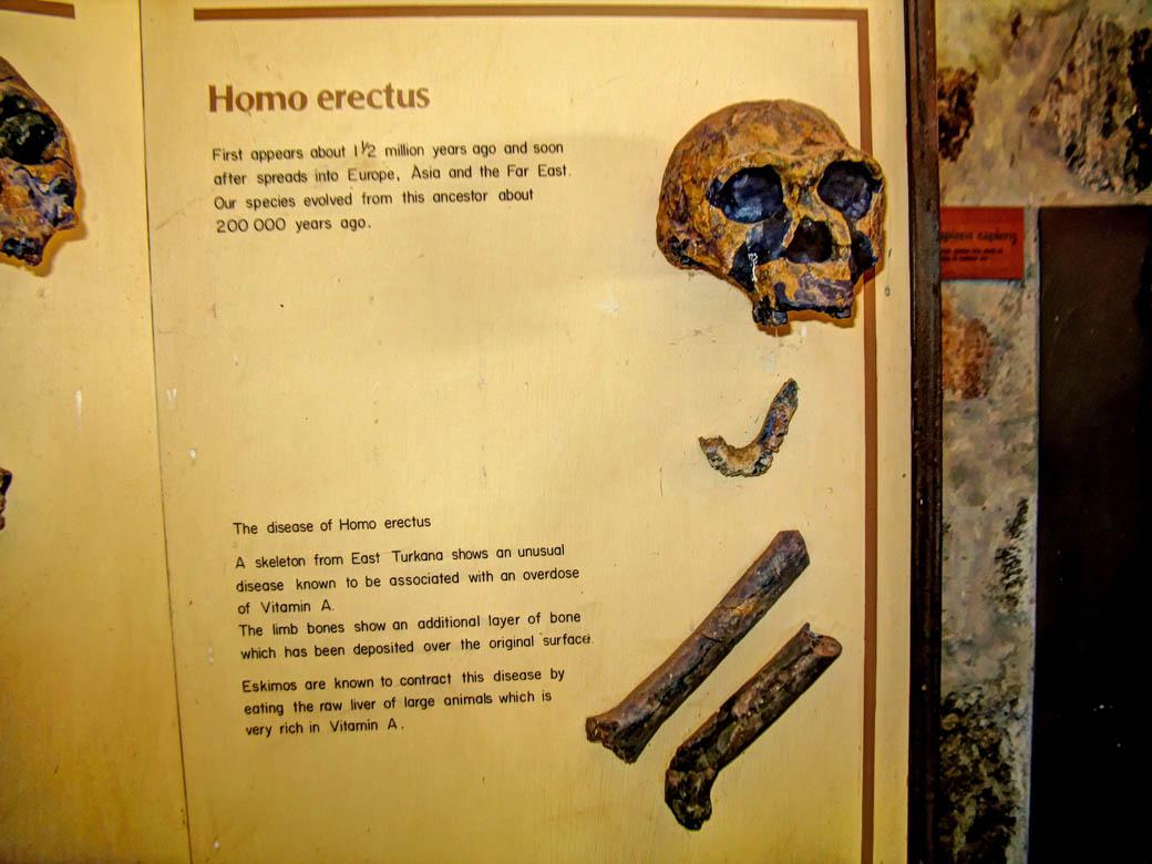 Koobi Fora Museum_Artefacts1