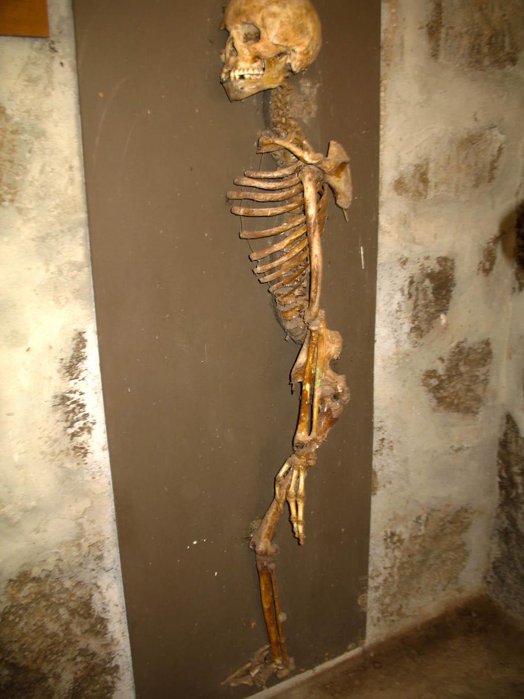 Koobi Fora Museum_Skeleton