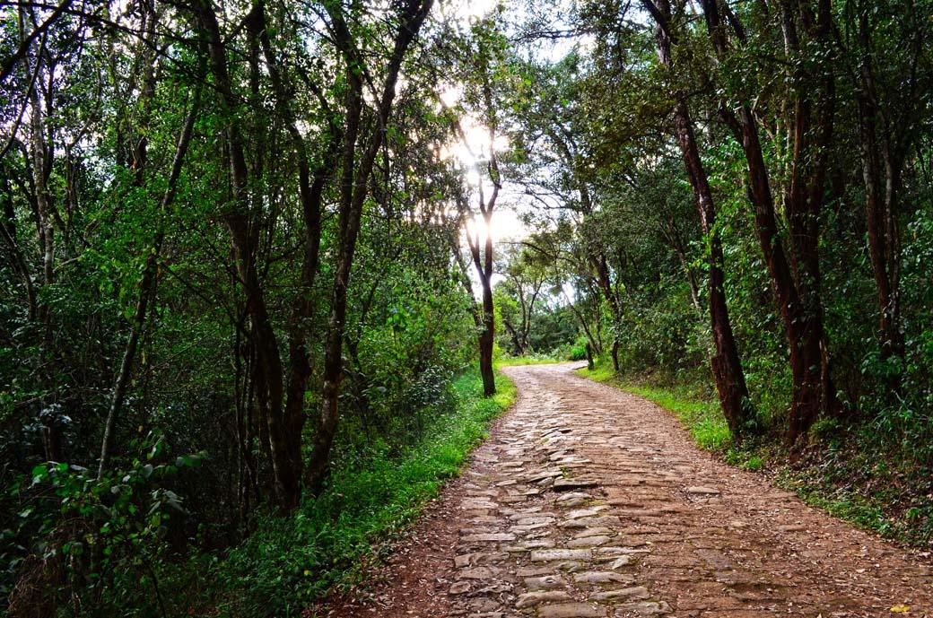 Oloolua Nature Trail_Path