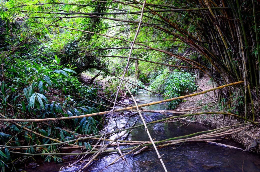 Oloolua Nature Trail_River3
