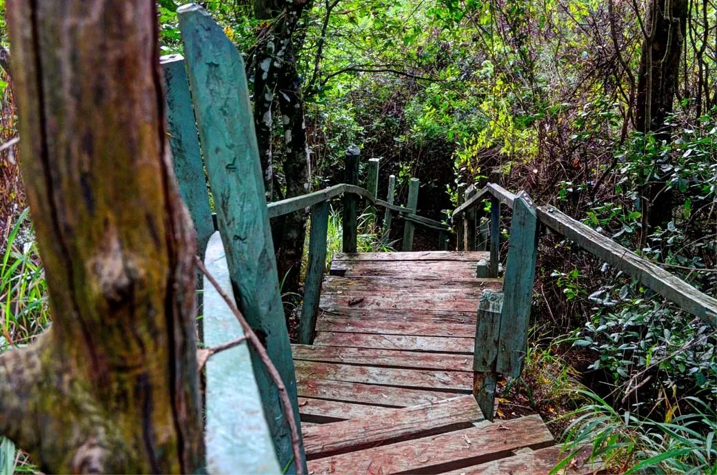 Oloolua Nature Trail_Walkaway