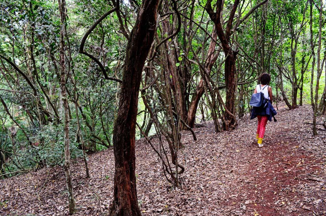 Oloolua Nature Trail_stroll