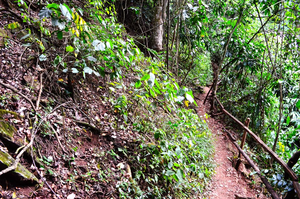 Oloolua Nature Trail_trail on slope2