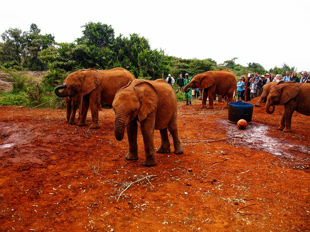 3 unmissable experiences Nairobi_David Sheldrick
