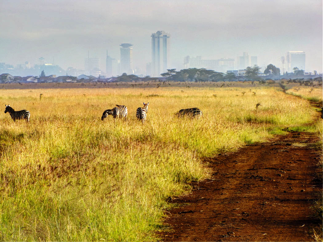 3 unmissable experiences Nairobi_Nairobi national park2