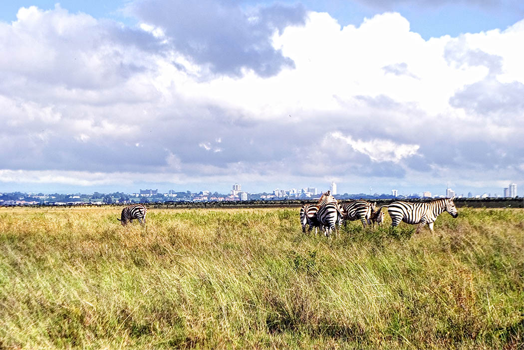 3 unmissable experiences Nairobi_Nairobi national park4