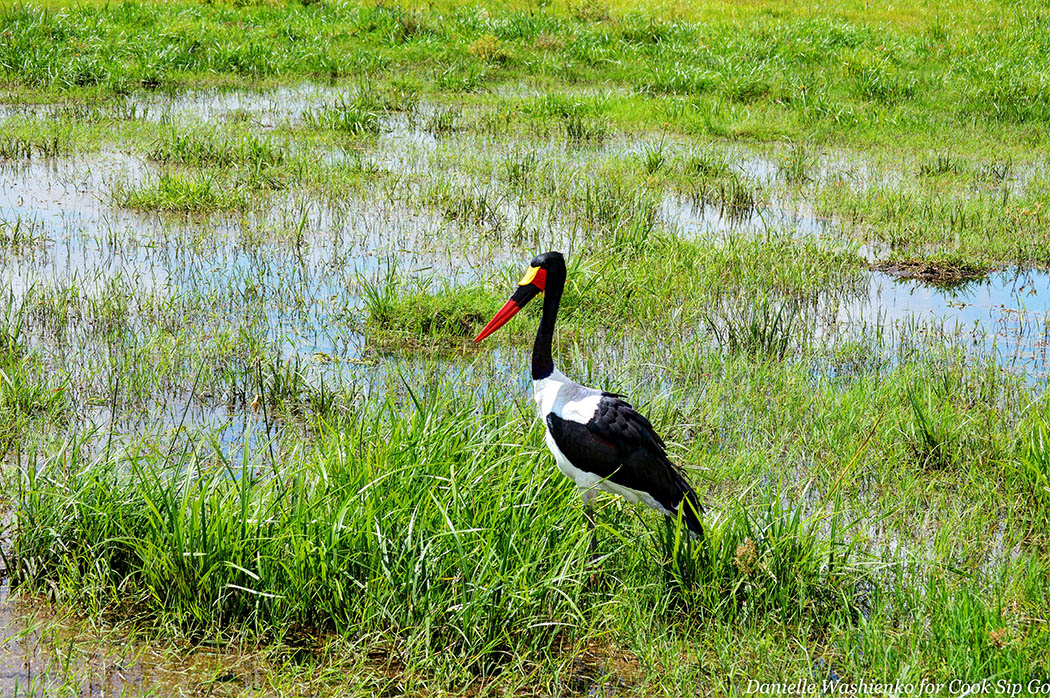 Birds of Amboseli National Park_Saddlebill