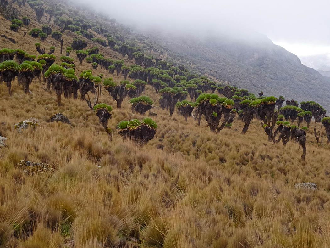 Mount Kenya_Mackinder's valley 12