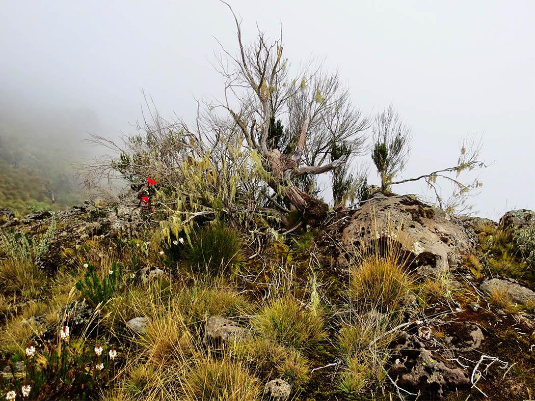 Mount Kenya_Mackinder's valley 6