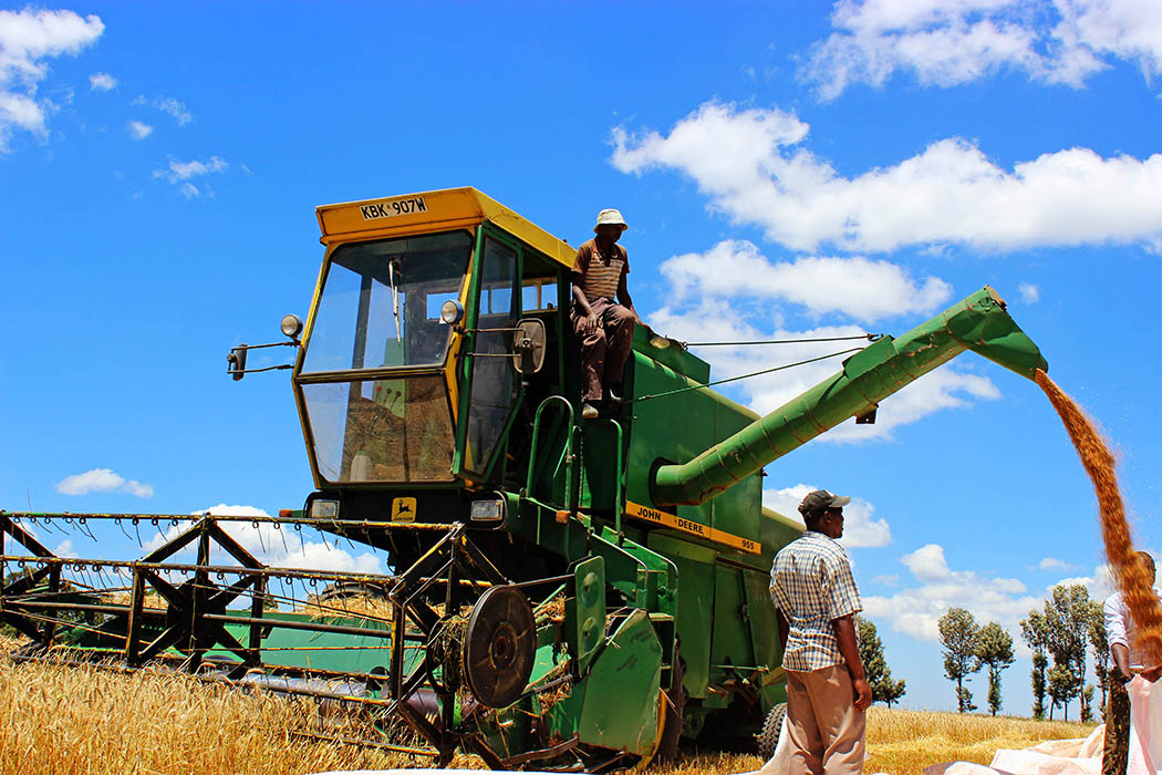 Unexpected Kenya_Wheat Harvesting Moiben