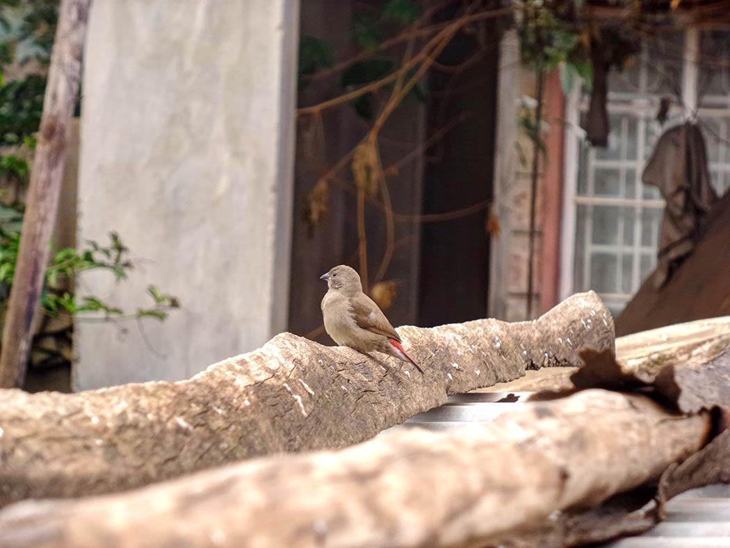 Wildlife in my backyard_robin on log