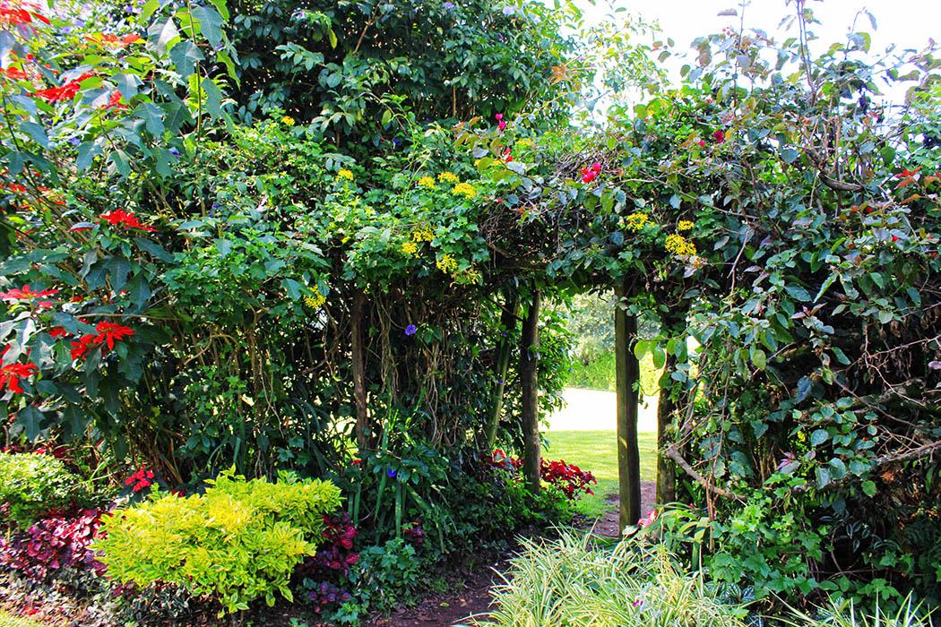 Kapsimotwa gardens_bush hedge