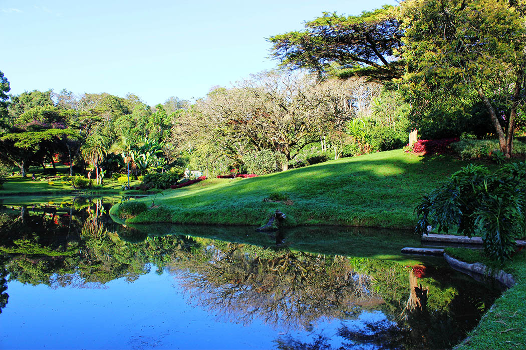 Kapsimotwa gardens_tree reflection