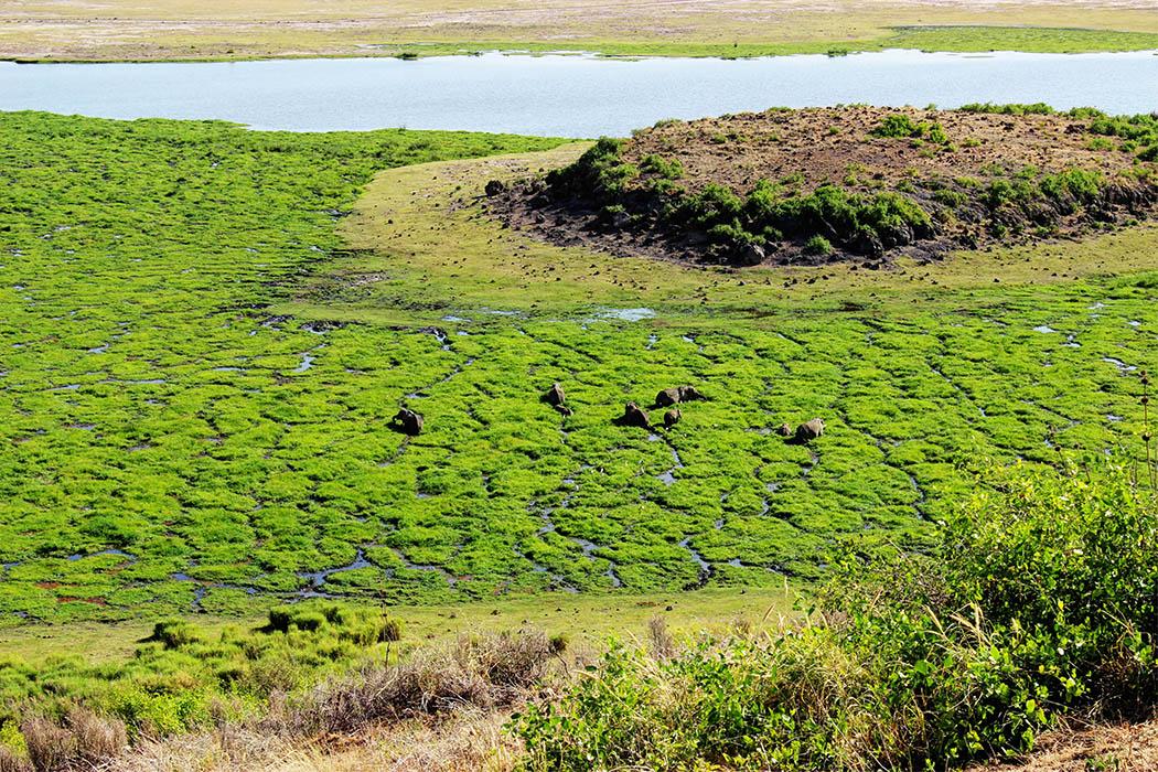 Amboseli Serena Safari Lodge_elephants at observation hill1
