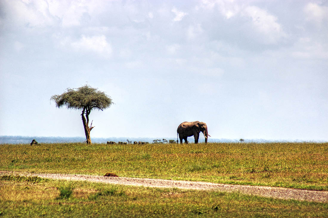 Ol Pejeta Conservancy_Morani Tree