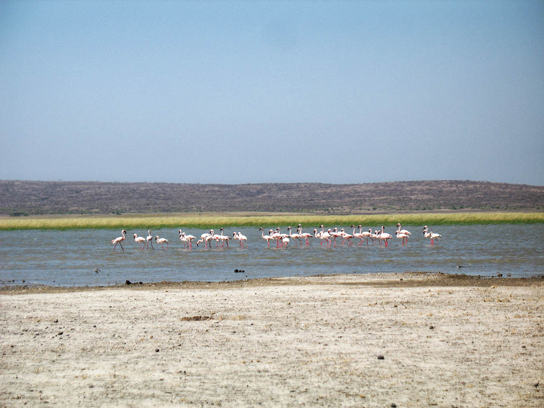 Lake Turkana_Flamingoes