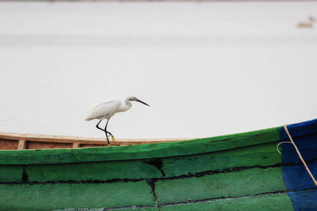Lake Turkana_little egret (2)