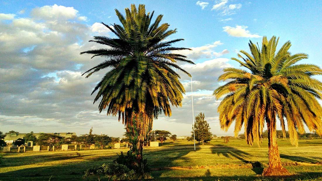 TECNO Camon C5 Review_Uhuru gardens_palm trees